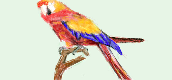 Parrot drawn in Facebook Graffiti