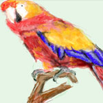 Parrot drawn in Facebook Graffiti by Evan Islam