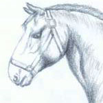 Sketch of Horse by Evan | Animal Study