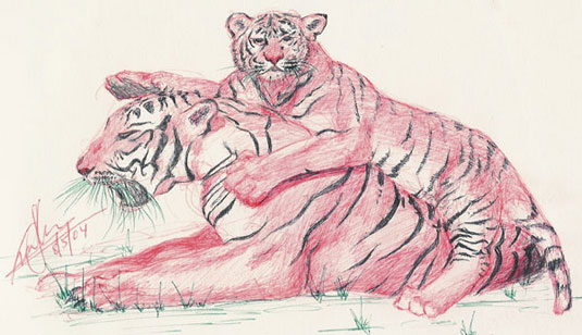 Bengal Tiger and Tiger Cub Drawing