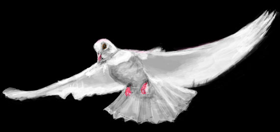 White Dove Drawing