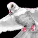 White Dove drawn in Facebook.com Graffiti by Evan Islam