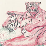 Bengal Tiger and Cub Sketch Drawn in Red and Black Ink